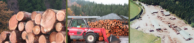 cut larch round logs in sawmill yard